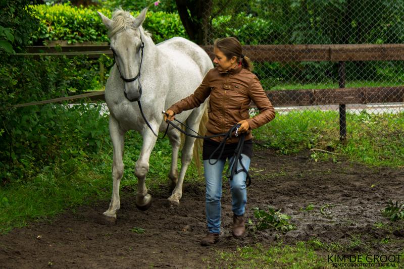 Paarden snappen