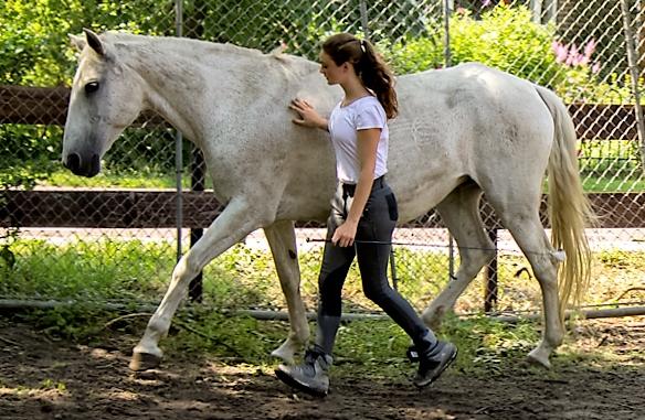 Dansen met paarden